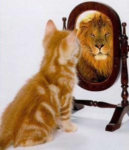 cat-lookin-in-mirror-01